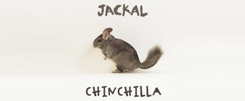 Jackal – Chinchilla (Free Download)